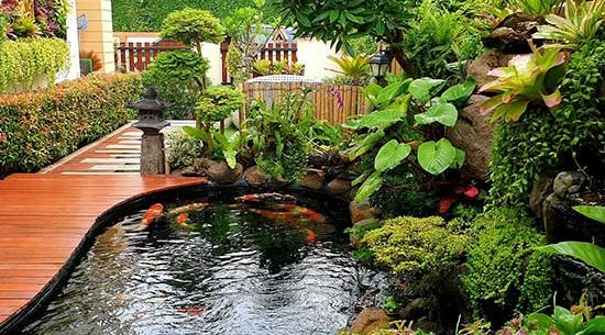 Fish-pond-at-home